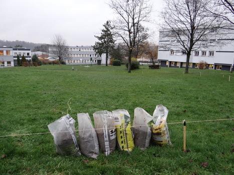 À Saint-Ouen l'Aumône, le lycée Jean Perrin crée un espace de nature | Les colocs du jardin | Scoop.it