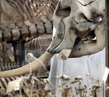 Paris. Armé d'une tronçonneuse, il s'attaque à l'éléphante de Louis XIV | Mais n'importe quoi ! | Scoop.it