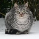 Feral Cat Coalition of Oregon offers free spay/neuter surgeries in January - OregonLive.com   Cats Cat History   Scoop.it