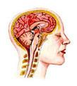 ¿Qué es y cómo funciona el pensamiento? | PSICOLOGIA | Scoop.it