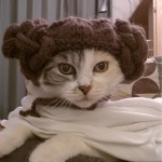Princess Leia: Cat Edition | All Geeks | Scoop.it