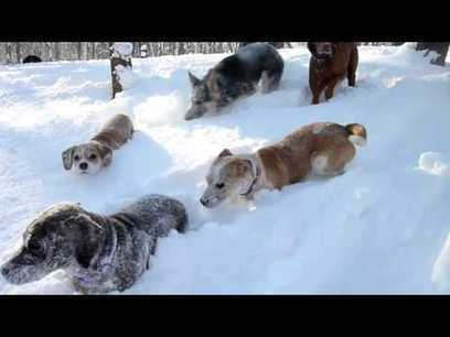 Polar Vortex Aftermath: Scenes from Camp Fido | staged | Scoop.it