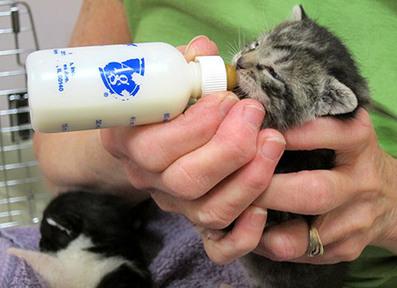 Bottle Babies « Sundays at the Shelter | Good Advice | Scoop.it