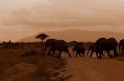 Evernote, un petit éléphant qui vous veut du bien | Evernote, gestion de l'information numérique | Scoop.it