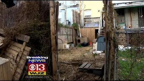 Police: 5 Arrested, More Than 2 Dozen Dogs Seized In West Baltimore Dog ... - CBS Local   petsblogs   Scoop.it