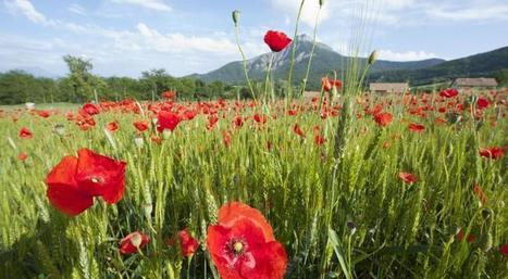 Le projet agroécologique en France | Chimie verte et agroécologie | Scoop.it
