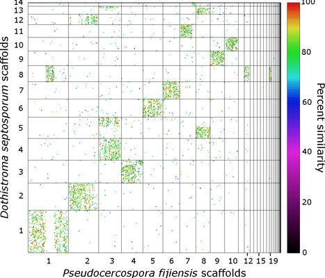 PLoS Genetics (2016): Combating a Global Threat to a Clonal Crop: Banana Black Sigatoka Pathogen  Pseudocercospora fijiensis  (Synonym  Mycosphaerella fijiensis ) Genomes Reveal Clues for Disease C... | WU_Phyto-Publications | Scoop.it