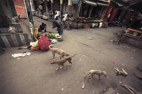 Le chien paria, cette réincarnation des voleurs | Serge Bouvet, photographe reporter | PHOTOGRAPHERS | Scoop.it