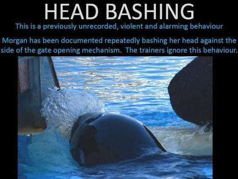 Dr Ingrid Visser presents verbal testimony in orca court case (Includes interview) | Animals in captivity - Zoo, circus, marine park, etc.. | Scoop.it