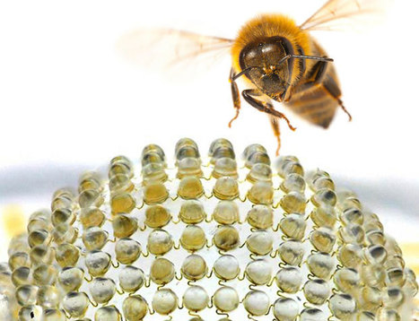 Bionic Camera Inspired by Insects - Interesting Engineering | Art_Science_Technology | Scoop.it