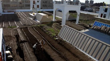 A Farm Grows in Brooklyn on the Roof | Bees and Beekeeping | Scoop.it