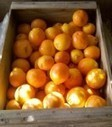 Citrus Compounds Found to Have Anti-Diabetic Effects   Real Natural   Citrus Science   Scoop.it