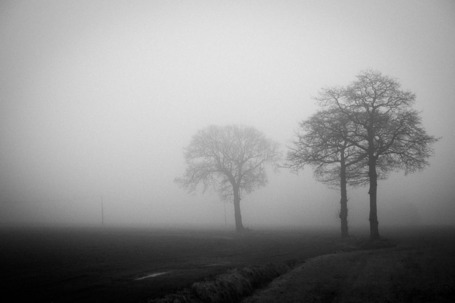 Fog in Belgium | Michiel Fokkema | Fuji X-Pro1 | Scoop.it