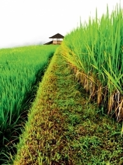 The brighter side of Bali | G-Online, the best of green | Bali Style | Scoop.it