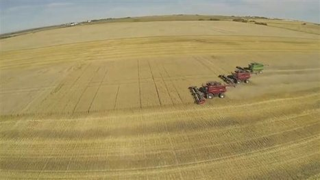 A world food staple, Canada leading in wheat development | WHEAT | Scoop.it
