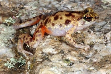 3 New Species Discovered in Australia's 'Lost World' | Current Events | Scoop.it