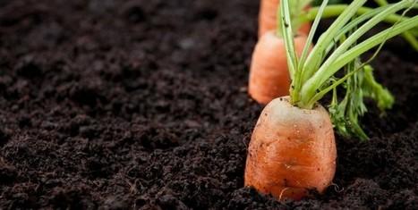 ¿Quieres memorizar algo? Conoce los alimentos que te ayudarán - | Alimentos | Scoop.it