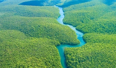 Land rights for Peru's Amazon key in climate fight - World Bulletin   Rainforest EXPLORER:  News & Notes   Scoop.it