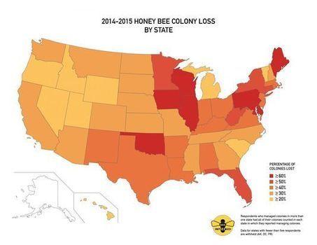 Pertes d'abeilles sans précédent aux Etats-Unis | Mes News A La Une | Scoop.it