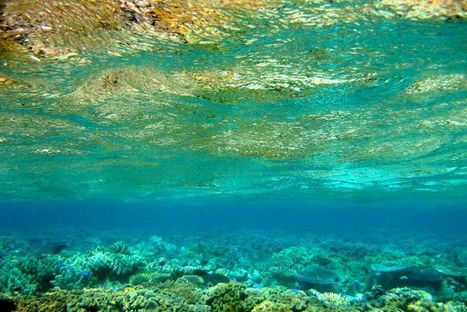 Coral Sea a hotspot for marine life - ABC News (Australian Broadcasting Corporation) | VCE Biology | Scoop.it