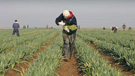 Migrant farmworkers shun UK as sterling tumbles - Farmers Weekly | Agrarforschung | Scoop.it