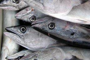 Aquaculture increasingly important to fill global demand for seafood - Aquaculture Directory | Aquaculture Directory | Scoop.it
