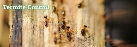 Pin by Mary Lewis on Home Termite Control | Pinterest | Home Termite Control | Scoop.it