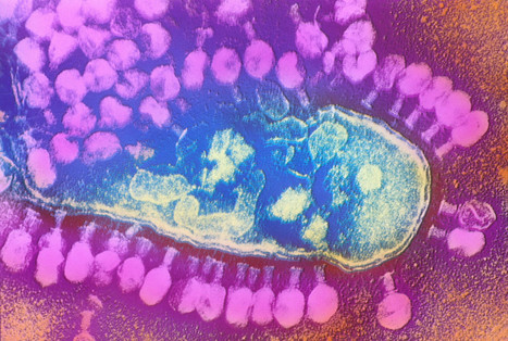 Scientists Unearth a Trove of New Bacteria-Killing Viruses | Aquatic Viruses | Scoop.it