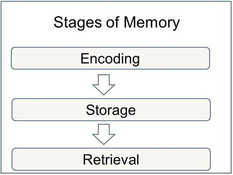 Memory, Encoding Storage and Retrieval - Simply Psychology | Group 7 | Scoop.it