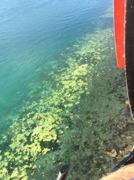 "Great Barrier Reef: aerial survey reveals extent of coral bleaching (""the tragedy slowly happening"") 
