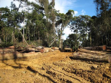 Au Cameroun, la forêt sacrifiée | Biodiversité | Scoop.it