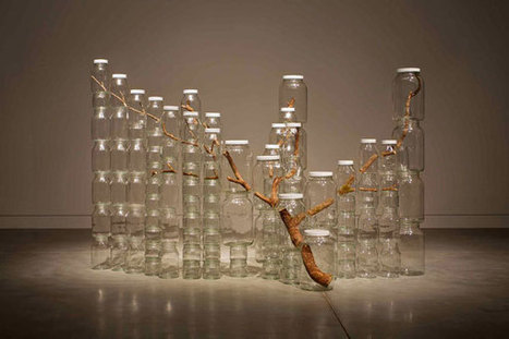 Naoko Ito: Urban Nature | CAM Raleigh | Contemporary Installation Artists | Scoop.it