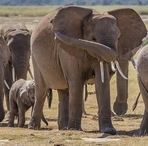 The #Science Is In: #Elephants Are Even Smarter Than We Realized [Video] #greenpeace | Limitless learning Universe | Scoop.it