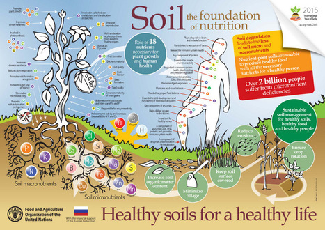 #Soil An essential ingredient to healthy food and nutrition #GMO #pesticides #herbicides are poisoning it. | Limitless learning Universe | Scoop.it