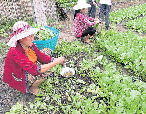 Agribusiness opportunities growing in Laos | Agricultural Research | Scoop.it