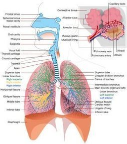 Respiratory Problems ~ How Massage Can Help | Arun Thai Natural Health | Scoop.it