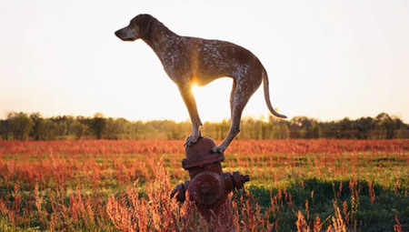 Photographer finds balance with talented shelter dog | Self Improvement | Scoop.it