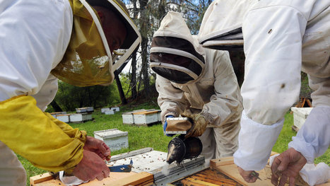 Program Looks to Give Bees a Leg (or Six) Up | Chemistry Regulation | Scoop.it