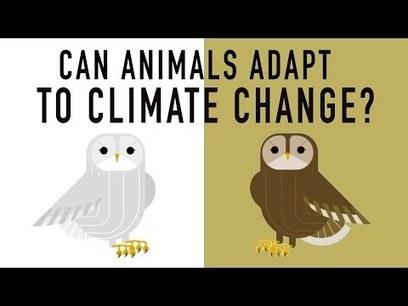 Can wildlife adapt to climate change?   GarryRogers Biosphere News   Scoop.it