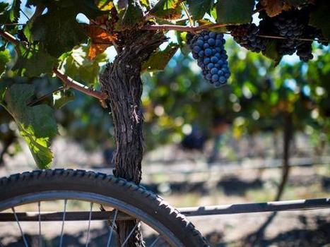 Climate change is going to ruin wine | Viticulture | Scoop.it