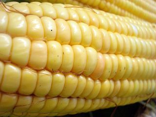 Genetically modified foods: What you need to know | YOUR FOOD, YOUR HEALTH: Latest on BiotechFood, GMOs, Pesticides, Chemicals, CAFOs, Industrial Food | Scoop.it