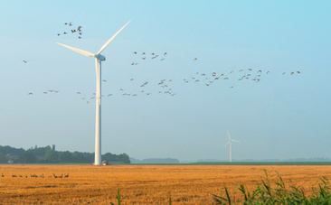 4 Things That Kill More Birds Than Wind Farms | Puntos de referencia | Scoop.it