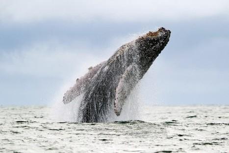 Protéger l'océan, une activité qui peut rapporter 900milliards | Biodiversité & RSE | Scoop.it