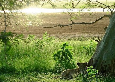 Drone Mapping in Gorongosa National Park Mozambique - sUAS News | drones | Scoop.it