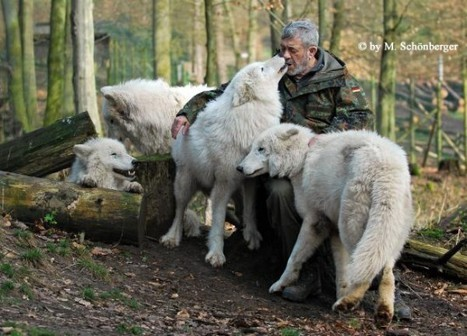 Living with Wolves – The Amazing Story of Werner Freund | Strange days indeed... | Scoop.it