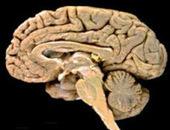 El cerebro. Partes. Funciones del cerebro. Bueno Saber   Neurodidactica   Scoop.it