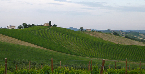 "Wines from ""where time has stood still"", from Le Marche to US, 