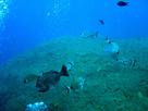 En Méditerranée, les aires marines protégées encore insuffisantes et peu connectées | Espaces naturels littoraux | Scoop.it