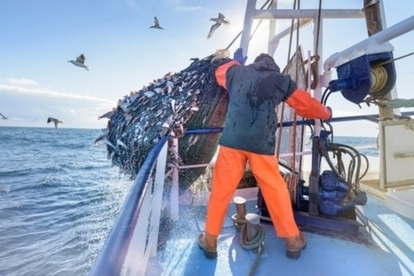 Activists Open an Online Window onto the Global Fishing Fleet | Aquaculture Directory | Scoop.it