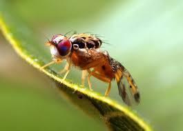 Agrumes/insectes : Un plan de lutte biologique lancé au Maroc | EntomoNews | Scoop.it